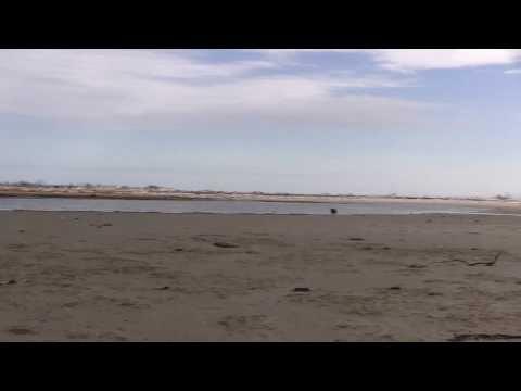 Bay and ocean beach meet at the way-back mudflats -- Holgate NJ