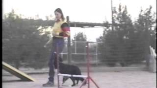 Learn New Ways To Be Your Dog's Best Friend - Dog Agility, Obedience, And Puppy Classes