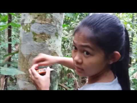 FHP3105 FOREST SILVICULTURE : MOTHER TREE EXPEDITION