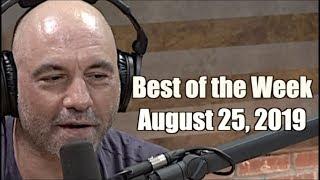 Best of the Week - August 25, 2019 - Joe Rogan Experience