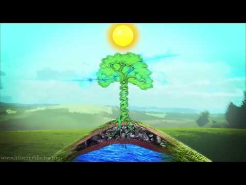 Visualization Meditation Technique - DNA Tree Visualization