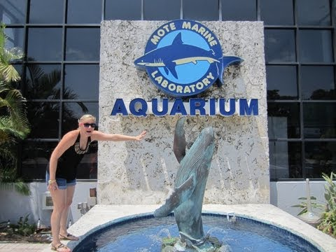 Mote Marine Laboratory Aquarium And Shopping In Sarasota!!! (6.13.12)
