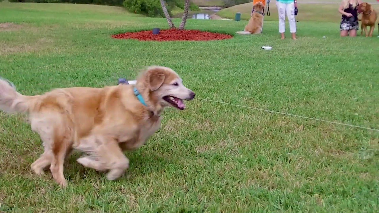 (VIDEO) SwiftPaws will keep your dog chasing for fun