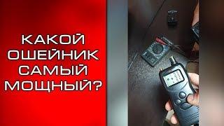 Какой электронный ошейник выбрать?