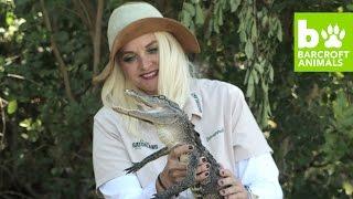 The Crocodile Queen: Teaser