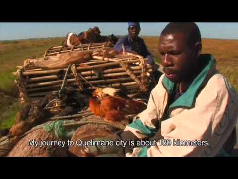 The Potential of Livestock Markets in Mozambique
