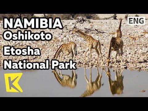【K】Namibia Travel-Oshikoto[나미비아 여행-오시코토]에토샤 국립공원/Etosha National Park/Safari/Wild animals/Cheetah