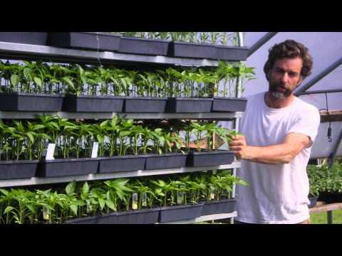 Business Advice for Organic Farmers DVD Trailer