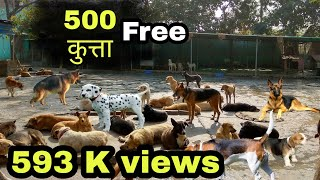 Ek admi 500 kutte // free of cost for anyone //  free for adoption thumbnail