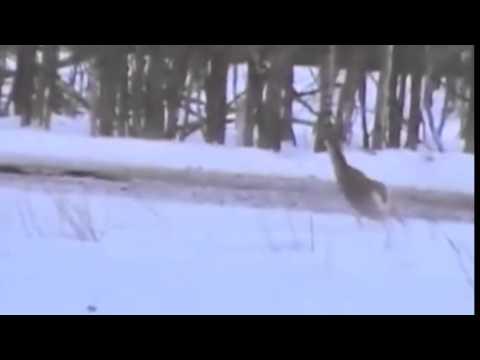 Deer Hunting: Doe with a slug gun