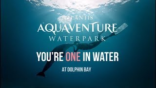 You're One In Water | Aquaventure Waterpark | Atlantis, The Palm