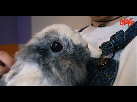 Dierbaar (Groninger studenten en hun huisdieren): Meike's konijn Henk