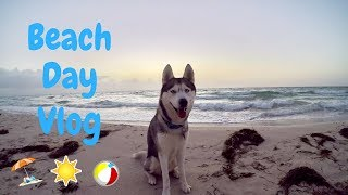 HUSKY BEACH DAY! Gohan Goes to the Beach!