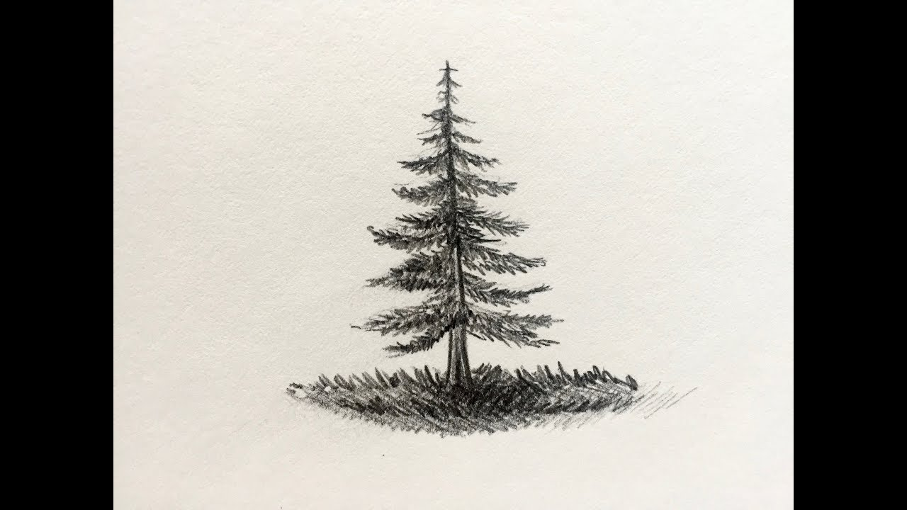 how to draw a pine tree [ 1280 x 720 Pixel ]