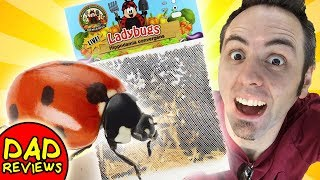 NATURAL PEST CONTROL FOR YOUR VEGETABLE GARDEN | Live Ladybugs Amazon: Nature