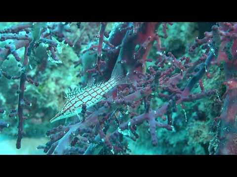 2015 palau Island's Sam's Tuor