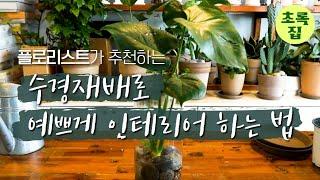 초록집 ㅣ수경재배로 예쁘게 인테리어 하는 법
