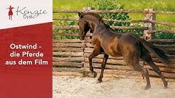 Ostwind - die Pferde aus dem Film