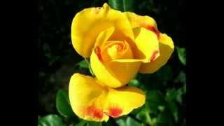Tum Jiyo Hazaron Saal - (Sujata) - John Baitali (Birthday Song)