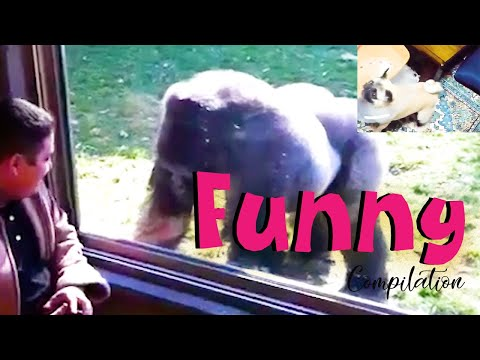 best-funny-videos-compilation-|-best-of-the-year--if-you-can-try-not-to-laugh-3