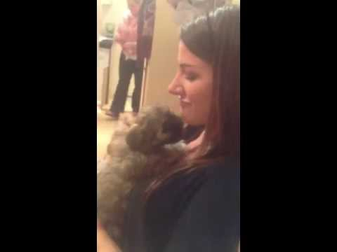 Lhasa Apso Puppy Kisses from Walter