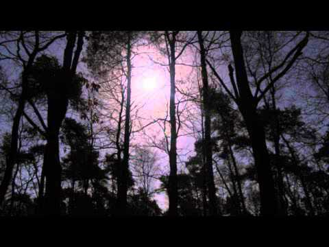This White Mountain - A Walk Through the Woods on a Moonlit Night