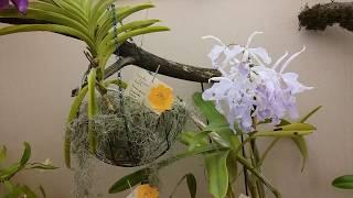 Выставка орхидей 2019 в биологическом музей им. К.А. Тимирязева