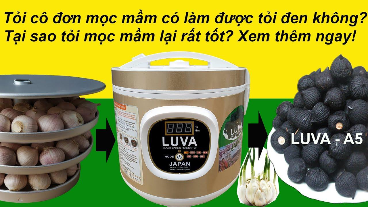 Cách làm tỏi đen bằng máy làm tỏi đen LUVA D2 (new) & tỏi cô đơn mọc mầm. How to make black garlic ?