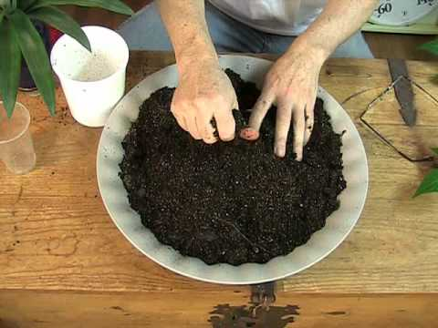 Perfect Indoor Soil And Plant Feeding