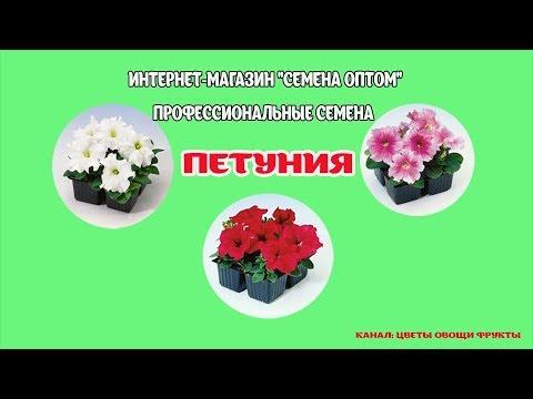 Проф. семена петунии.Какие расцветки я заказала. Цветы на продажу.