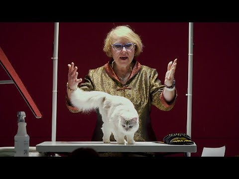 CFA International Cat Show 2017 - Rachel Anger Allbreed Champion Final Top 10