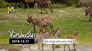 Pitastharaya - 17th December 2016