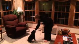 Emma-wonder Dog
