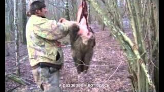 Jenotsuņa ādas pareiza dīrāšana / Как снять шкуру с енотовидной собаки