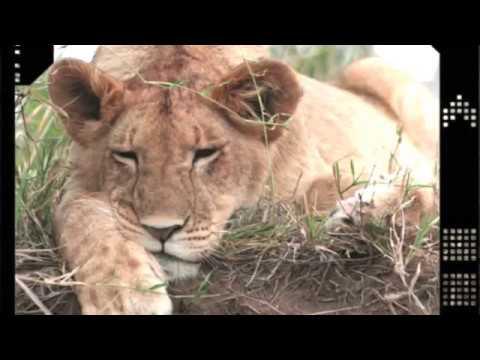 BIG CAT DIARY SAFARI 2006 part 1
