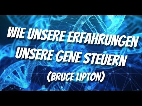 Wie unsere Erfahrungen unsere Gene steuern (Bruce Lipton) ???? Die Welt ist anders als du denkst!