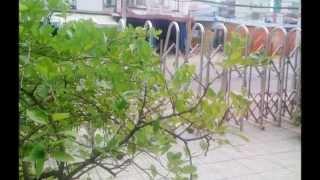 Van phong cho thue si khu vuc trung tam quan 4, Tp. Hồ Chí Minh; Call: 0917283444, 0917936444
