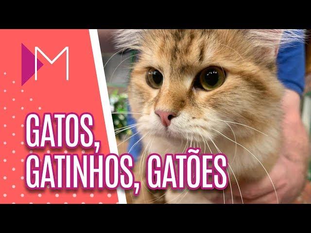 Exposição de gatos de raças diferentes - Mulheres (22/02/2019)
