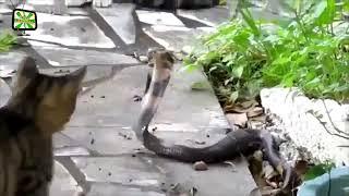 Бесстрашные Коты ★ кошки не боятся ничего 2017 СМОТРЕТЬ ДО КОНЦА!!!