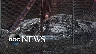 9 people killed in Hawaii plane crash