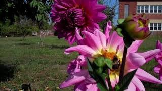 It has been a stellar year @ Vel's Purple Oasis Garden. Forever tha...