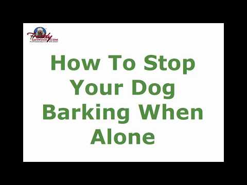 how to stop your dog barking when alone top tips youtube