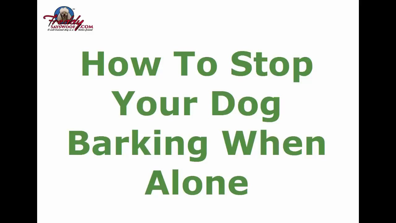 Tips On Training Dog To Be Left Alone In House
