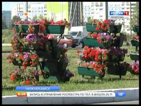 Полмиллиона цветов к юбилею Нижнекамска