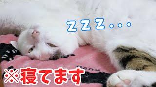 体がありえない方向に曲がったまま爆睡する猫