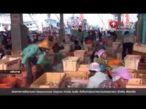 กสิกรไทยคาดส่งออกสินค้าประมงไทยปี58หดตัว10% : NewsConnect Channel