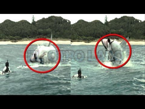 Los Ataques de Tiburones mas Brutales (videos)