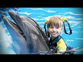 Dolphins 🐬 Smart, Beautiful, Funny Dolphins Funny Pets