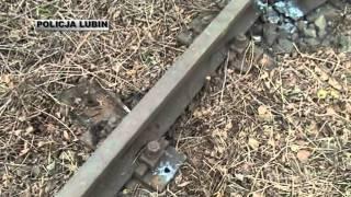 Kradli szyny kolejowe