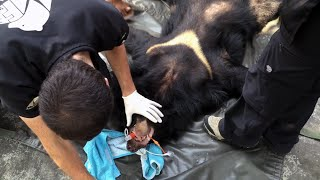 Moon Bear Rescue in Vietnam (shot and edited on an iPhone)